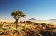 NamibiaOverland_Quiver-tree-Kokerboom2-185x120