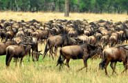 Best of Tanzania, 7 Days Safari, Accommodated