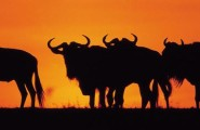 East African Adventure, South, 21 Day Overland Tour, Accommodated