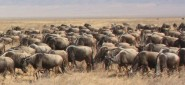 Central &amp; East Africa Overland, 21 Days Overland Tour, Camping