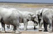 Explore Namibia, 12 Day Overland Tour, Camping