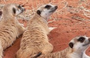 Namibia Highlights, 13 Day Self Drive Tour, Accommodated
