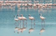 KenyaSafari_Flamingos-Lake-Nakuru-21-185x120