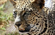 Kruger National Park Overland Tour, 4 Days Overland Tour, Accommodated