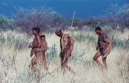 Central Kalahari & Botswana Game Parks, 17 Days Safari, Camping