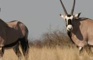 Botswana: Kalahari Explorer, 7 Days Safari, Camping