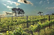 The Garden Route, 7 Day Overland Tour, Camping
