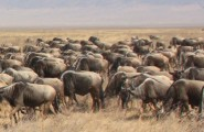 Central & East Africa Overland, 21 Days Overland Tour, Camping