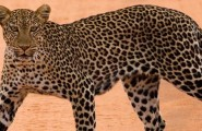 Great East Africa Safari, 12 Days Safari, Accommodated