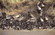 The Big Migration, 8 Days Safari, Accommodated