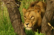 Self Drive Itinerary: From Cape Town to Victoria Falls, 30 Day Self Drive Tour, Accommodated